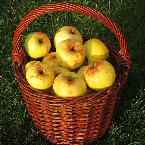 Jablka Produkta - foto