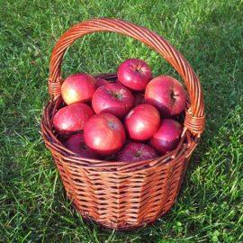 Jablka Vanda - foto