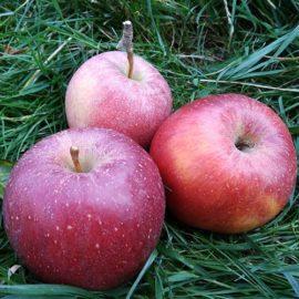 Jablka Nabella - foto